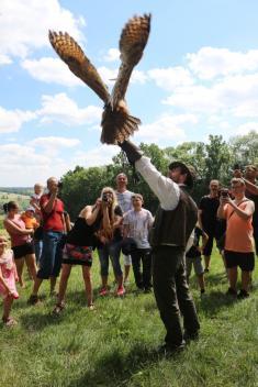 Dotkni se křídel